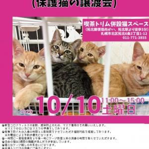 【10/10】トリムDEお見合い会(保護猫の譲渡会