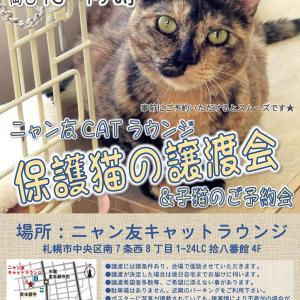 【10/17-18】ニャン友CATラウンジの譲渡会&子猫のご予約会