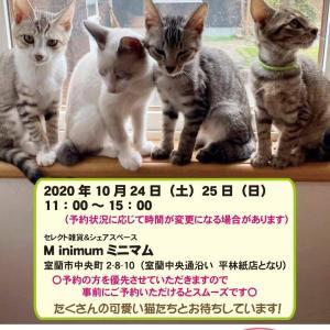 【10/24-25】保護猫の譲渡会 in 室蘭