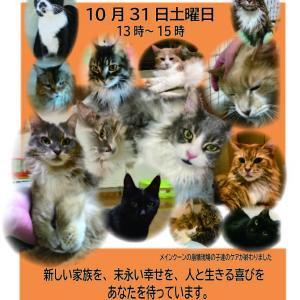 【10/31】ニャン友CATラウンジ メインクーンのお見合い会