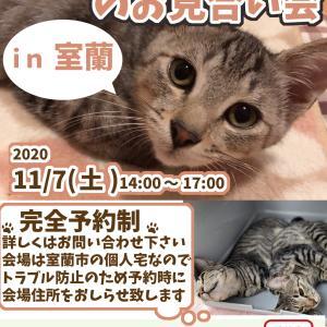 【11/07】保護猫のお見合い希望 in 室蘭