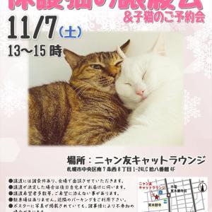 【11/07-08】ニャン友CATラウンジ 保護猫の譲渡会!子猫のご予約会(※11/8も開催します)