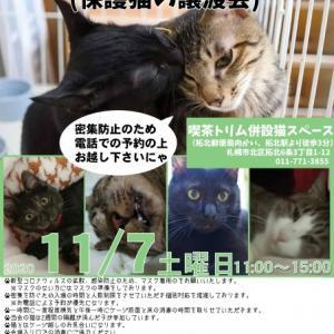 【11/07】トリムDEお見合い会(保護猫の譲渡会)