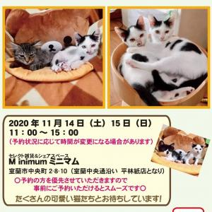 【11/14-15】保護猫の譲渡会 in 室蘭