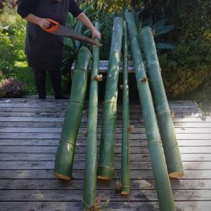 森の仲間と竹の会!