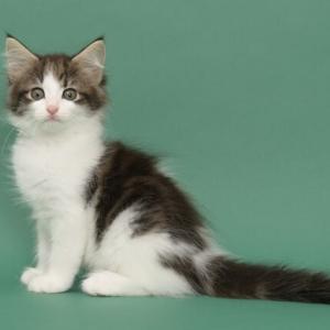ヨーロッパの素敵な子猫💖