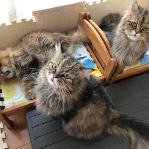 リビングの猫たち