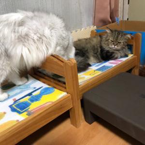 リビングの猫たち②
