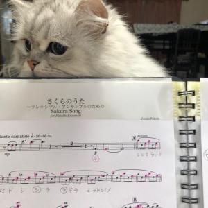 フルートの練習にお付き合い猫