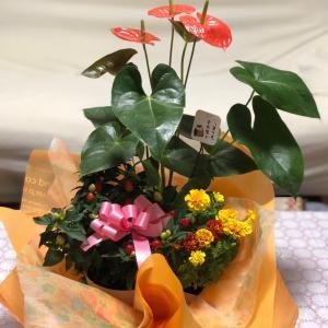 敬老の日に花をもらいました