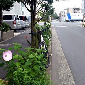 散歩コースの花 その1
