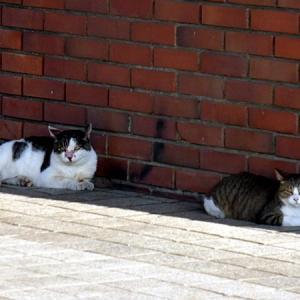 公園猫も暑い!!