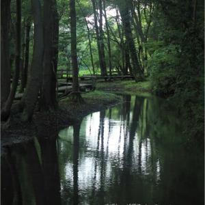 水と緑と光と。