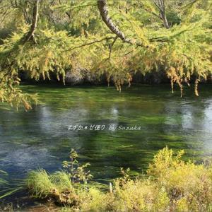 今年はもう見られない、湯川流れる秋の美景