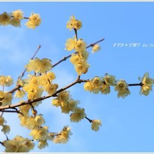 ほのかな春を運ぶ花