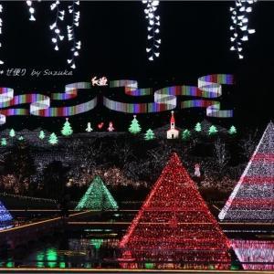 定番すぎても外せない'光のピラミッド'と'冬ぼたん' ~やっぱり行ってしまった「あしかがフラワーパーク」・1
