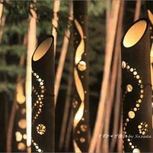 夜の竹林にて。