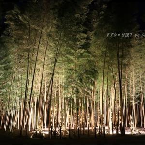 竹林ライトアップ・'神秘の竹あかり'