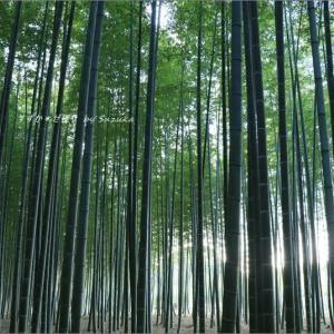 竹林トワイライト。
