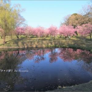 花桃の園・1 ~桃色に彩られる池