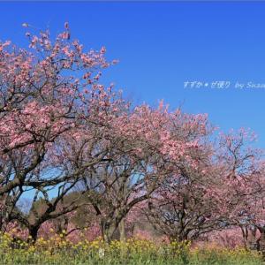 花桃の園・2 ~青と桃と黄。