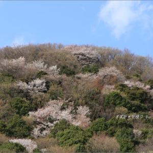 山桜パッチワーク。 ~'山桜の里'にて・1