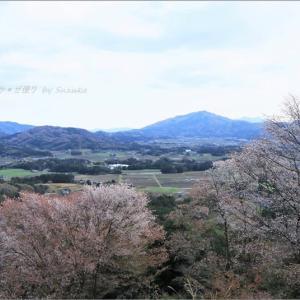 魅了される山桜絶景① ~'山桜の里'にて・4