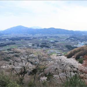 魅了される山桜絶景② ~'山桜の里'にて・5