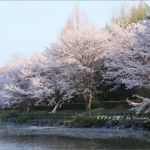 ある桜風景