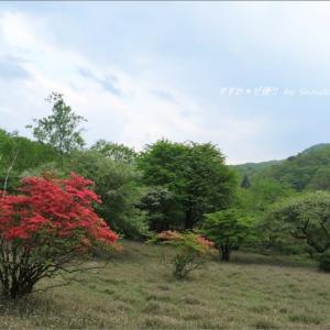 ヤマツツジとズミのある風景 ~古峰ヶ原(こぶがはら)湿原にて