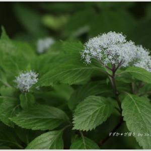 初夏の野の花 ~「花乃江の郷」にて