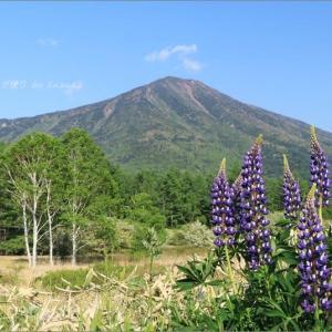 花と男体山