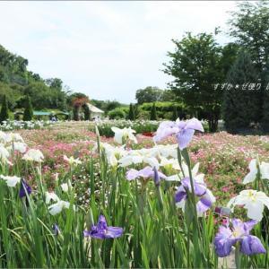 花菖蒲咲く庭 ~「あしかがフラワーパーク」にて