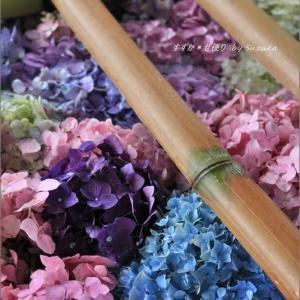 唐澤山(からさわやま)神社の花手水