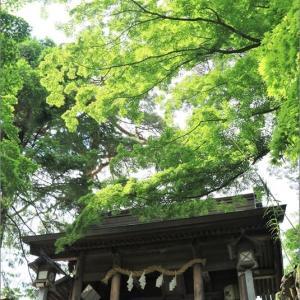 久しぶりの唐澤山(からさわやま)神社