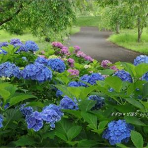 つがの里・紫陽花のある風景