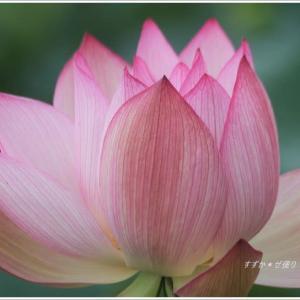 開きゆく花