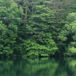 梅雨空の磐梯高原の旅・7 ~弥六沼の緑