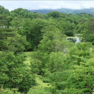 梅雨空の磐梯高原の旅・11 ~緑に埋まる中瀬沼
