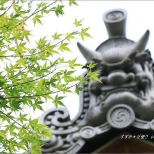 夏の宝徳寺