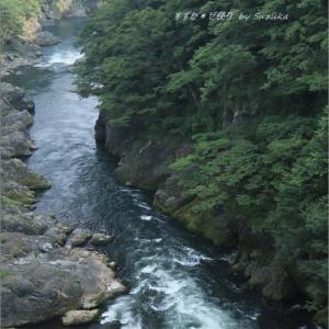 渓流と緑に癒やされる散歩道