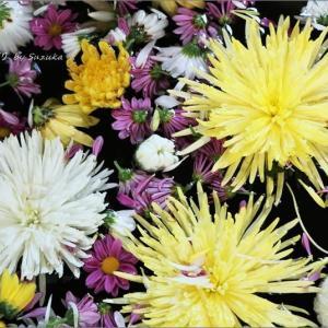 菊の花手水