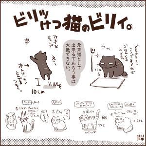 ねこ雑誌掲載 「ビリッけつ猫のビリィ。」