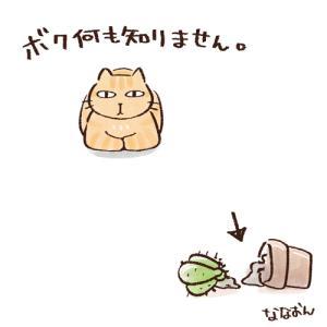 茶トラ全力の知らぬふり。
