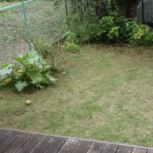 朝から群馬へ、午後戻って庭掃除