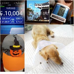 おはようございます(*´ω`*)令和元年10月21日・月曜日・先勝