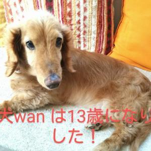 我が家の愛犬wan が13歳になりましたf(^_^)