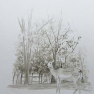 奈良公園の鹿(習作)単色画