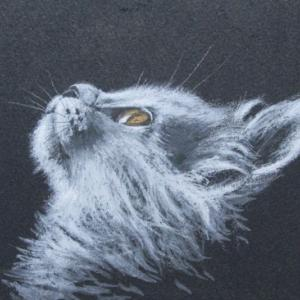 猫1(習作)