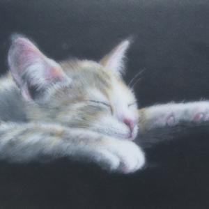 猫6(眠る猫)